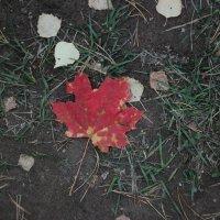 Осенний лист :: Александр Робинович