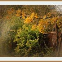 Осенняя картина :: Svetlana27