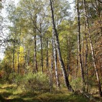 В осеннем лесу. :: Борис Митрохин