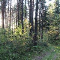 лесная дорога :: Виктор Филиппов