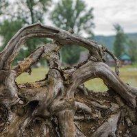 Скульптор-природа! :: Борис Кононов
