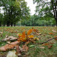 Вот и осень :: Yuri Mekhonoshin