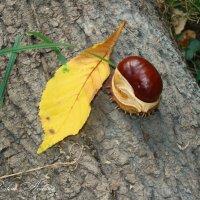 Осенний привет! :: °•●Елена●•° Аникина♀