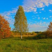 Простой осенний пейзаж. :: Бронислав Богачевский