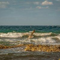 Кричала чайка над волнами... :: Александр Пушкарёв