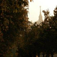 Осенние прогулки :: Марина Жилякова