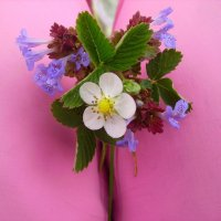 Лесные цветы :: Галина Дашевская