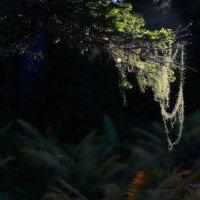 Поймавший свет :: Ilona An