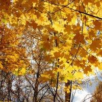 Луч солнца в кронах клёнов :: Наталья Золотых-Сибирская