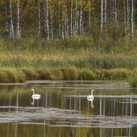 лебединое озеро :: Антонина