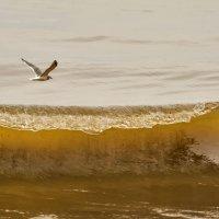 Чайка над волной на Охотском море. :: Ирина Токарева