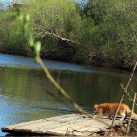 Кот рыбак :: ирина Пронина