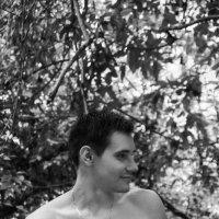 Джунгли... :: Светлана Деева