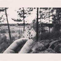 Лист берёзы :: Polli Air