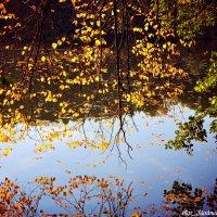 осень в отражении :: Ольга (Кошкотень) Медведева