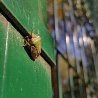 Зеленый клоп на зеленом заборе :: Длинный Кот