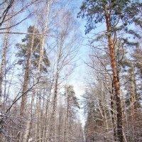 Скоро окунемся в зиму с ее прелестями :: Лидия (naum.lidiya)