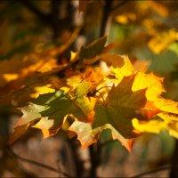 Осенние листья :: Annie Makovskaya
