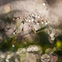 после дождя... :: Анна Семенова