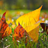 листья :: Олег Белан