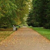 Аллея  в парке. :: Владимир Гилясев