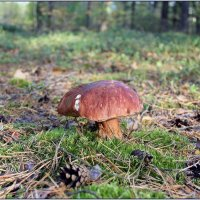 В осеннем лесу... :: Роланд Дубровский