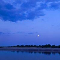 Ночь в синих тонах :: Лиса Обыкновенная *