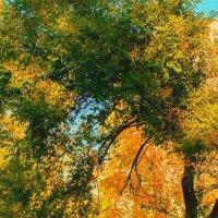 Обняла природу осень... :: Натусик ***