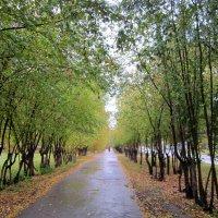 Яблочная аллея осенью . :: Мила Бовкун