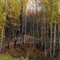 Золотая осень. :: Амет Джелилов