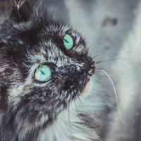 Красавица нашего двора :: Дарья Зилова