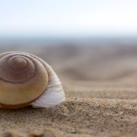 На пляже. :: Настёна .