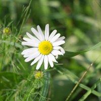 Цветы :: Любовь Бутакова