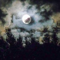 Лунная ночь :: Анатолий Антонов