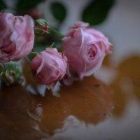 Последние розы :: Евгения Кирильченко