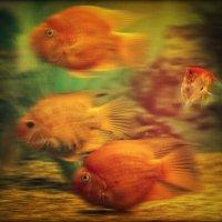 Рыбки золотые :: Ольга Мальцева