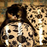 Мышка (кошка по кличке Мышка) :: Алексей Яковлев
