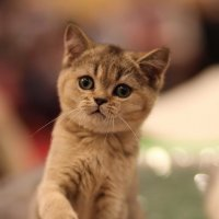 Котенок по имени.... :: Андрей Молчанов
