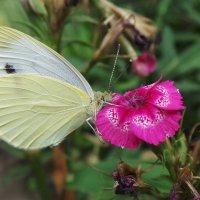 Бабочка :: Валентина Юшкова