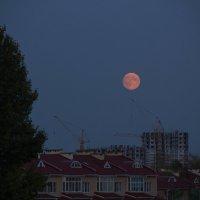 Кровавая луна :: Наталья Дмитриева