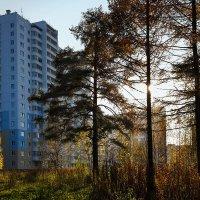 Новый дом. :: Валерий Молоток
