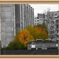 Буйство красок в колодце из серых коробок. :: Бронислав Богачевский