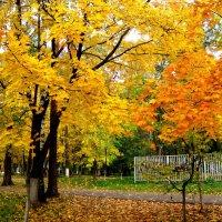 Золотая осень :: Елена Семигина