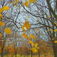 Листья желтые... :: Александр Атаулин