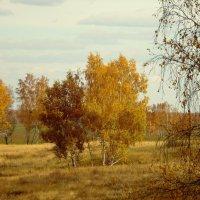 Золотые деньки. :: nadyasilyuk Вознюк