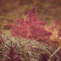 Какое-то растение) :: Harts