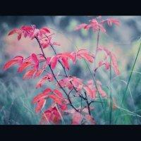 Красный :: Harts