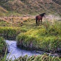 Красный конь :: Владимир Макаров