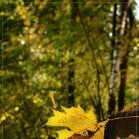 снова осень..... :: Юрий Сидоров