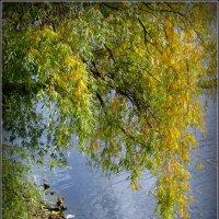 Берег реки Великой... :: Fededuard Винтанюк